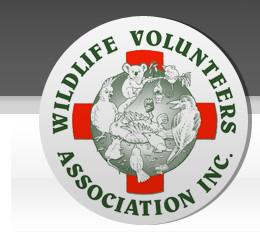 wildlife-volunteers-association