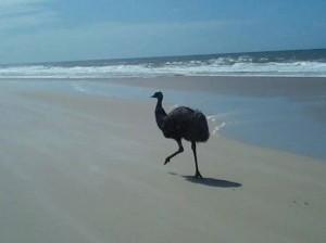 August 26 2014 Ocean Beach Bribie Island